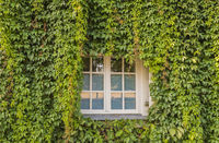 window and greened facade