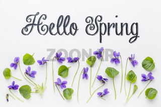 Hello Spring greetings with viola flowers