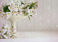 Apple blossoms in vase with soft pink background