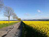 Blossoming landscape in Saxony, Germany
