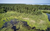 Aerial photo of forest bog in the Karakansky pine forest near the shore of the Ob reservoir.