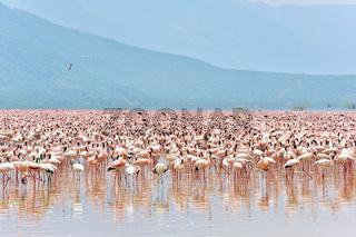 Flamingos am Bogoriasee