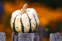 Pumpkin on wooden fence in autumn / fall