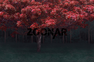 Abstract digital composite of mystical fairy forest with dark woods at background