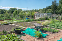 Dutch allotment garden with vegetables, wheelbarrow and shed