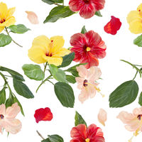 Hibiscus flowers Seamless Background. Floral Pattern