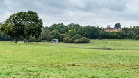 Countryside landscape with trees and meadows. Breinig DE