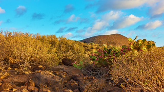 Desert with plants in Tenerife