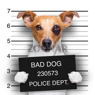 mugshot dog at police station