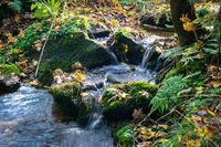 A little creek running vividly in an autumn forest