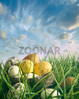 Bird nest with speckled eggs in the grass