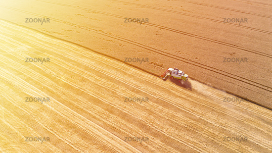 Aerial drone view of combine harvester collects harvest grain in a wheat field in summer sunny day