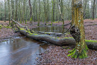 Forest stream in a mixed deciduous forest