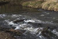 River Erft in Neuss
