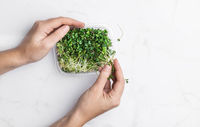 Microgreens bowl on white marble background. superfood concept