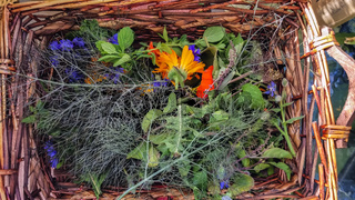 Colorful plants of calendula and borage
