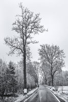 Winterly country road in Upper Franconia (Bavaria)