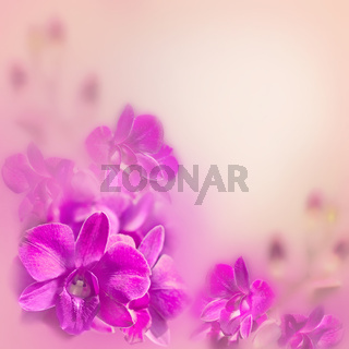 Abstract romantic floral background with pink tropical orchid flowers