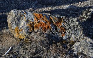 Flechten auf einem Stein im Herbst, Sydkap, Scoresby Sund, Ost-Grönland