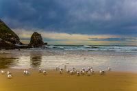 Flock of cormorants resting on the beach