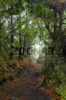 Acatenango Guatemala Hiking Trail