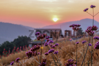 summer nature background with grass and flower village house and mountains back with bright sunset in the evening