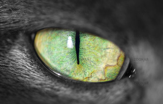 Cats eye with narrow pupil