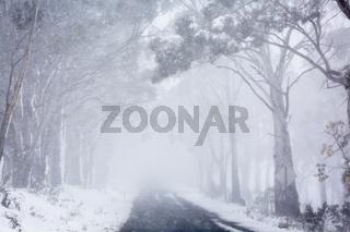 Blizzard snow conditions along a road near Oberon, Australia