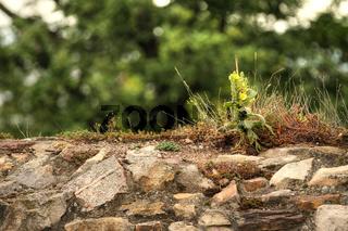 Burgmauer der Ruine Schauenburg