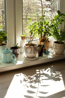 Interior of home garden with different ceramic pots on the windowsill