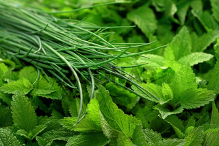 Chives and mint leaves herbs displayed on food market, closeup detail