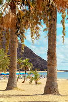 People sunbathing on sandy picturesque beach palm trees lined of Playa de Las Teresitas, enjoy views warm weather and Atlantic Ocean waters, Tenerife, Canary Islands, Spain. Vertical image