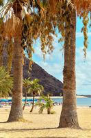 People sunbathing on sandy picturesque beach palm trees lined of Playa de Las Teresitas, enjoy views warm weather and Atlantic Ocean waters, Tenerife, Canary Islands, Spain. Vertical image