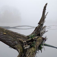 Tree stump in front of water in the November fog, Bislicher Insel nature reserve, Xanten, Germany
