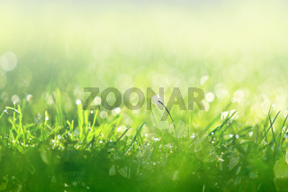 green grass close up