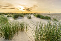Beach with sand dunes and marram grass with soft sunrise sunset back light. Skagen Nordstrand, Denmark. Skagerrak, Kattegat.