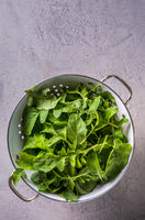 Fresh organic arugula leaves in white colander. Top view.