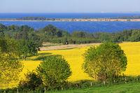 Rapsfeld an der Ostsee