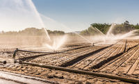 Irrigation system on a large farm field. Water sprinkler installation system.