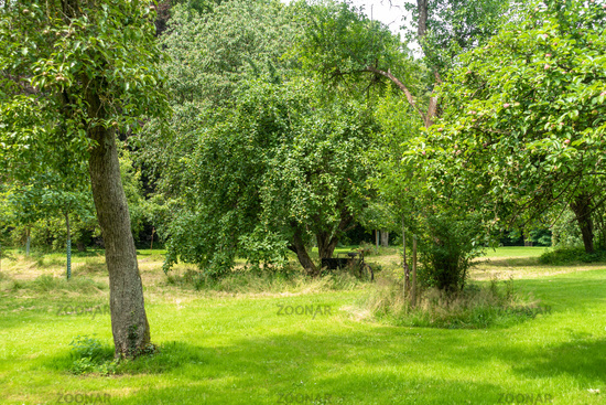 Romantic meadow orchard, Groß Siemen, Mecklenburg-Western Pomerania, Germany