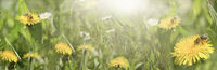 Sunny bee pasture - banner - panorama