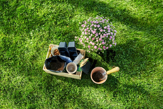 garden tools in wooden box and flowers at summer