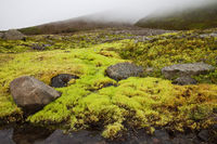Landscape with neon moss, Grenivik, Iceland, Europe