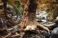 Kourtalioti Gorge - Crete
