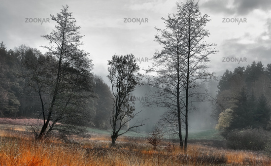 The Kroetenbach valley in autumn