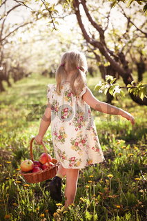 Little girl carrying basket with apples in garden