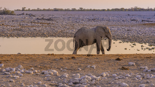 Elephant at a waterhole in the Etosha National Park in Namibia.
