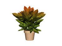 Green plant in flower pot