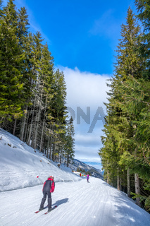 Skier on a Narrow Ski Slope Among Tall Spruce Trees