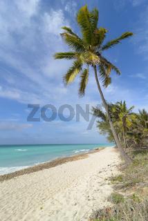 Karibik Strand mit Palmen, Caribbean beach with palms
